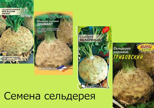 Выращивание корневого сельдерея на семена 200